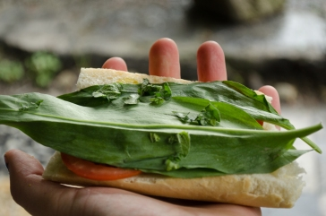 Oh, how wonderfully a few leaves of wild leeks, garlic mustard, and oregano can spruce up the (nearly) unavoidable lunch of bread.