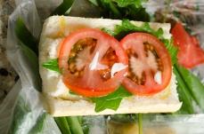 "Sprucing up the ""road sandwich"" with garlic mustard, Alliaria petiolata"